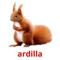 ardilla picture flashcards