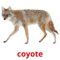 coyote picture flashcards