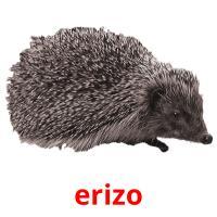 erizo picture flashcards