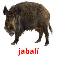 jabalí picture flashcards