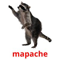 mapache picture flashcards