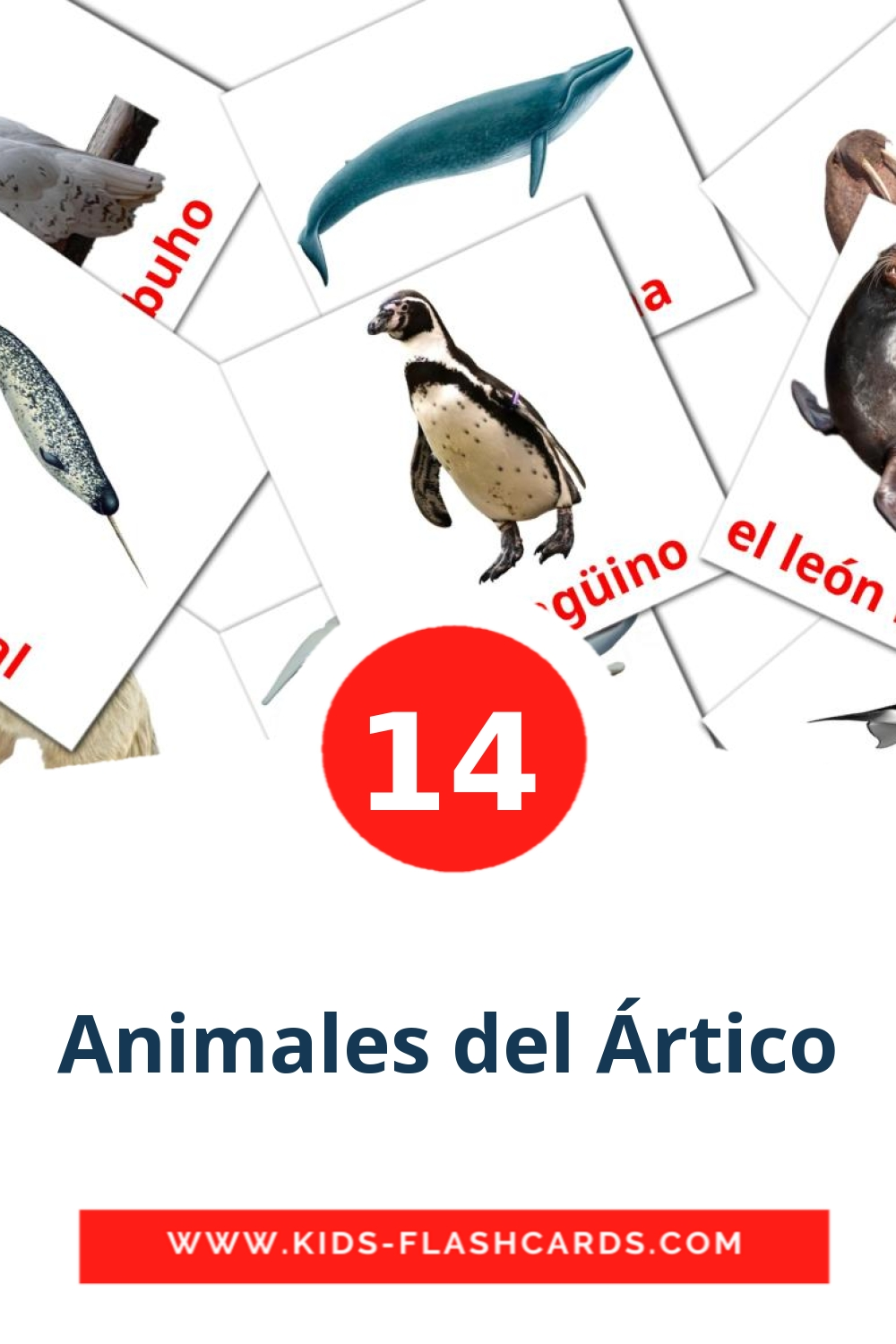 14 Animales del Ártico Picture Cards for Kindergarden in spanish