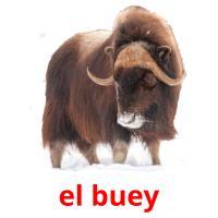 el buey picture flashcards