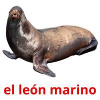 el león marino picture flashcards