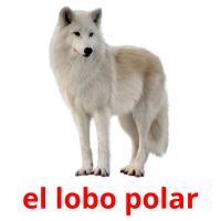 el lobo polar picture flashcards