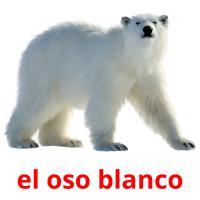 el oso blanco picture flashcards