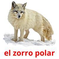 el zorro polar picture flashcards