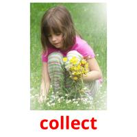 collect picture flashcards