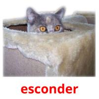 esconder card for translate