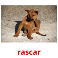 rascar picture flashcards