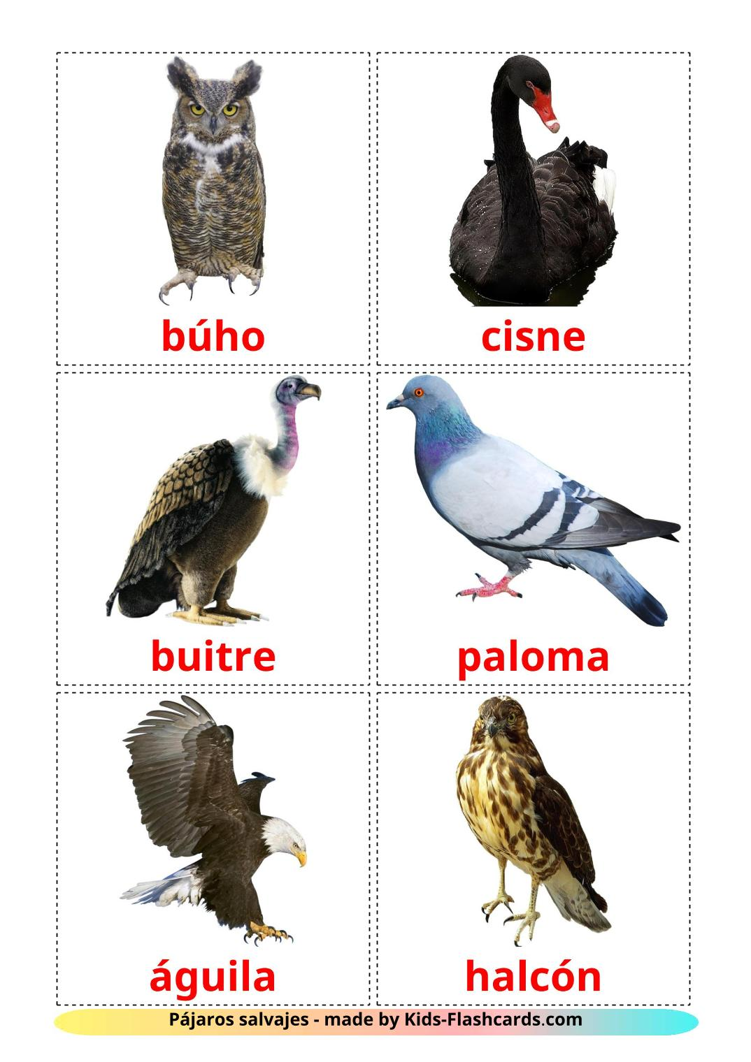 Wild birds - 17 Free Printable spanish Flashcards
