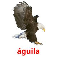 águila picture flashcards