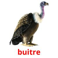 buitre picture flashcards