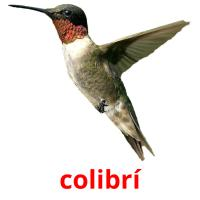 colibrí picture flashcards