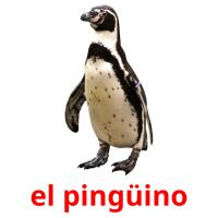 el pingüino picture flashcards