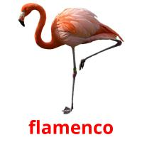 flamenco picture flashcards