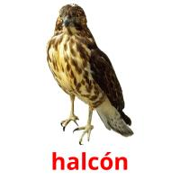 halcón picture flashcards