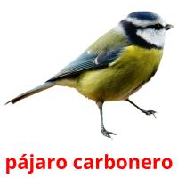 pájaro carbonero picture flashcards