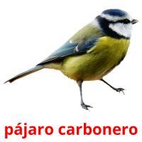 pájaro carbonero picture flashcards