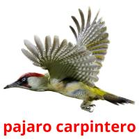 pajaro carpintero picture flashcards
