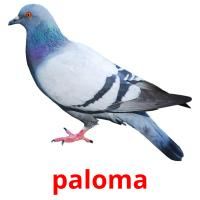 paloma picture flashcards