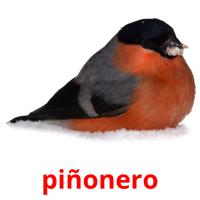 piñonero picture flashcards