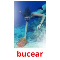 bucear picture flashcards
