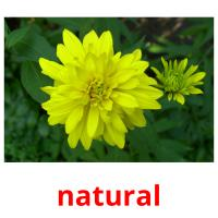 natural picture flashcards