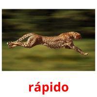 rapido picture flashcards