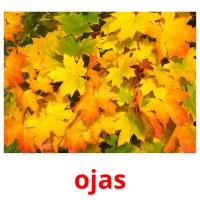 ojas picture flashcards