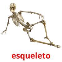 esqueleto picture flashcards