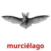 murciélago picture flashcards