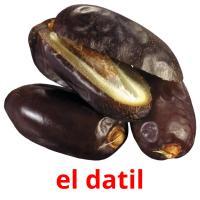 el datil picture flashcards
