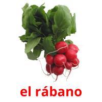 el rábano picture flashcards