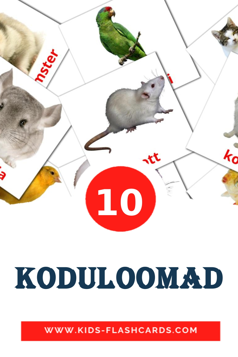 10 Koduloomad Picture Cards for Kindergarden in estonian