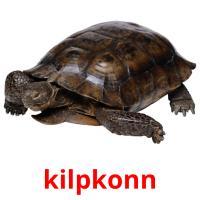 kilpkonn picture flashcards