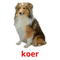 koer picture flashcards