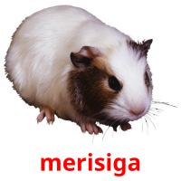merisiga picture flashcards