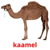 kaamel picture flashcards