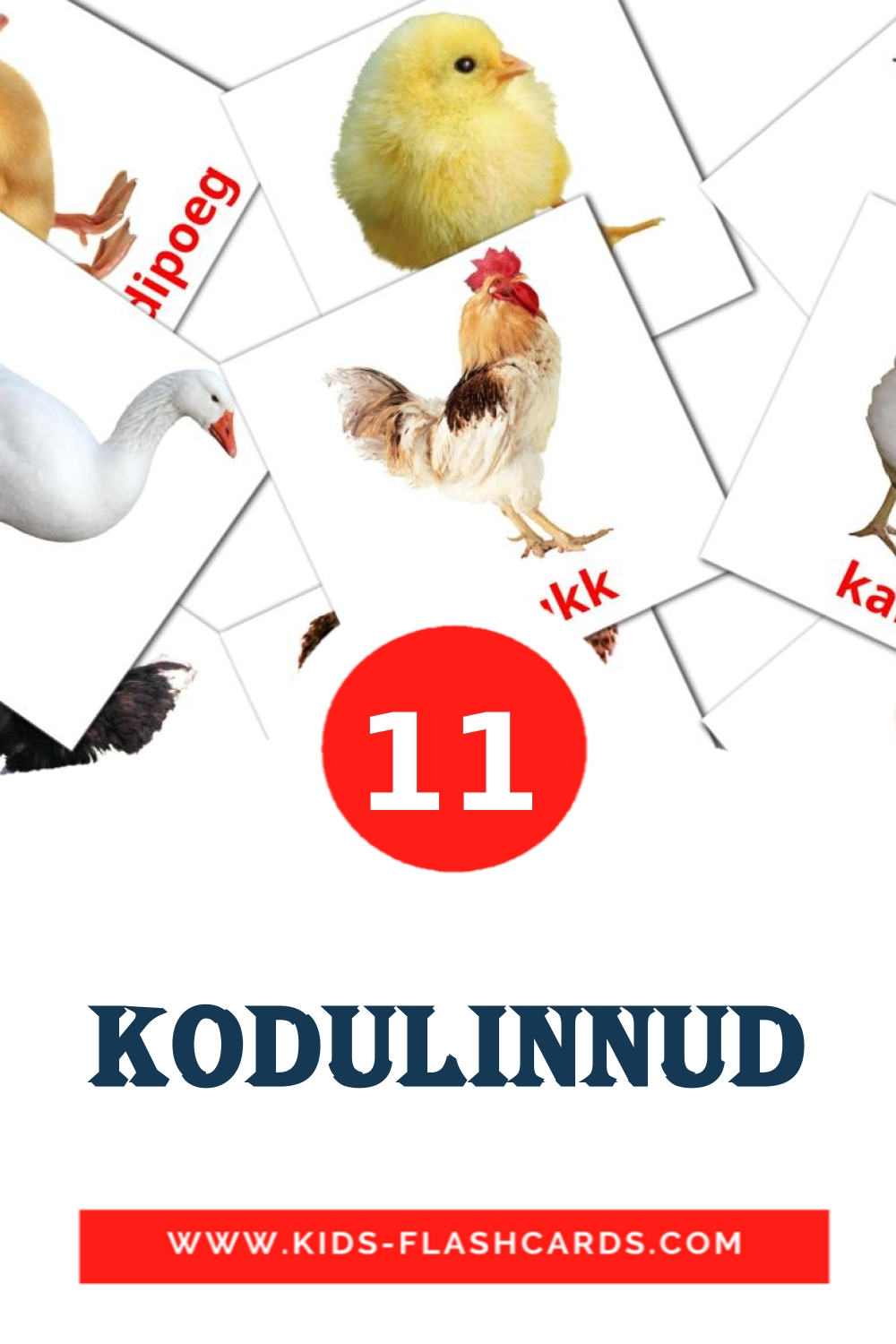 11 Kodulinnud Picture Cards for Kindergarden in estonian