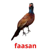 faasan picture flashcards