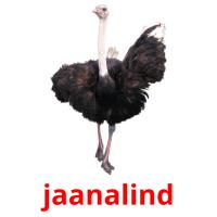 jaanalind picture flashcards