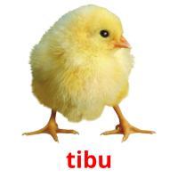 tibu picture flashcards