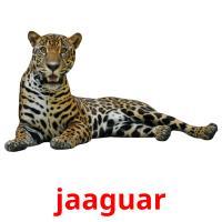 jaaguar picture flashcards