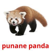 punane panda picture flashcards