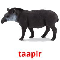 taapir picture flashcards
