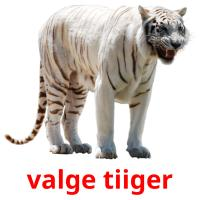valge tiiger picture flashcards