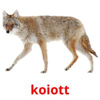 koiott picture flashcards