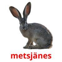 metsjänes picture flashcards