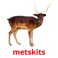metskits picture flashcards